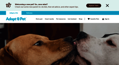 adoptapet.com - adopt a dog or cat today! search for local pets in need of a home.