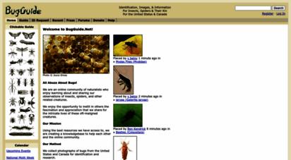 bugguide.net - welcome to bugguide.net! - bugguide.net