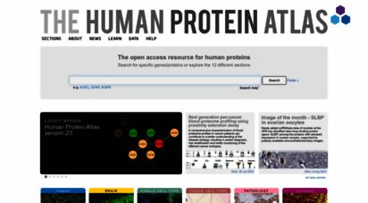 proteinatlas.org - the human protein atlas