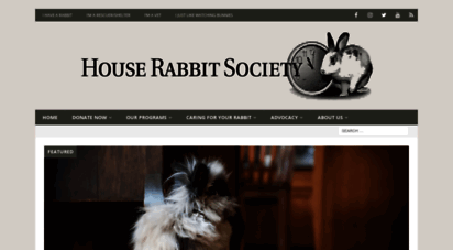 rabbit.org - house rabbit society  buy a bunny a little time